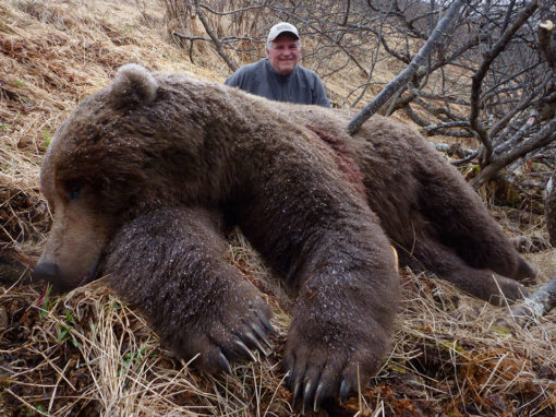 Peninsula Brown Bear Hunts